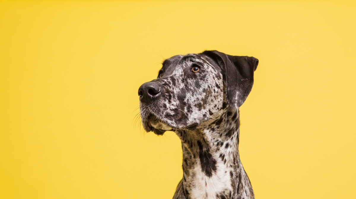 Nutram Pet Products Article